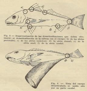 disecar peces