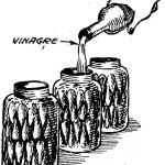 ENCURTIDOS – Como hacer AJIES EN VINAGRE