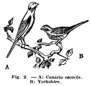Como hacer - Los CANARIOS 2