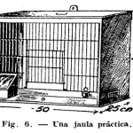 Como hacer – Criar CANARIOS (2 de 2)