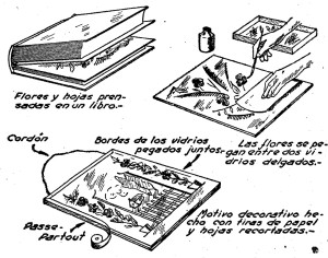 Cuadros de FLORES - Como hacer CUADROS CON FLORES secas 2