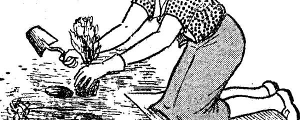 Como hacer y como se hace hagalo usted mismo carpinteria - Hacer abono organico ...