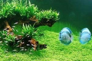 cuidados sobre peces y acuarios 3