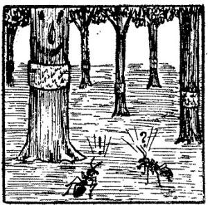 goma contra las hormigas
