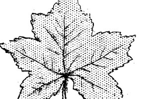 hojas de arboles como coleccionarlas