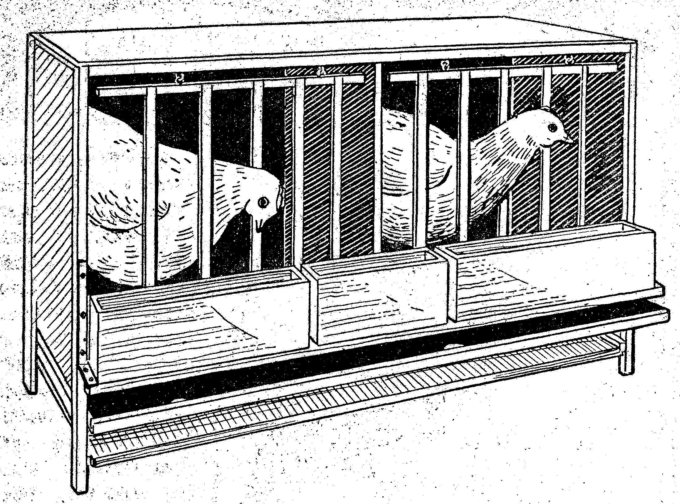 La gallina que soñaba con volar