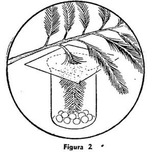 usos de la naftalina 2
