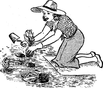 como hacer abono organico - abonos - fertilizantes
