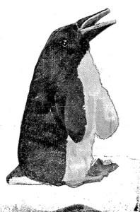 juguetes de madera - pinguino 1
