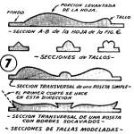 Como hacer – TALLAR en MADERA (2 de 2)